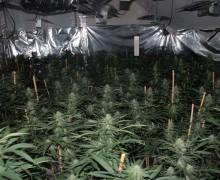 cannabis house 1